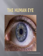 The Human Eye Mr.Batson powerpoint