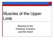 uppermuscles3