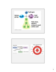 Proteins Lecture, Key Slides