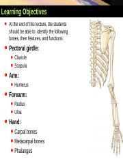 1. Bones of Upper Limbs YAYDAR 2014-2015