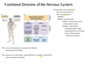 Topic 2 Overview of Brain Structure and Function(1)
