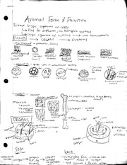 Animal form and function notes