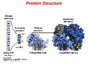 04ProteinStructure