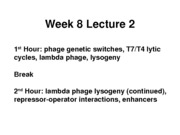 week_8_lecture_2
