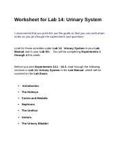 A & P 2 Urinary worksheet.docx