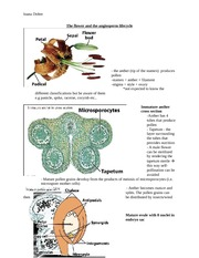 The_flower_and_the_angiosperm_lifecycle
