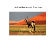 Animal Form Function