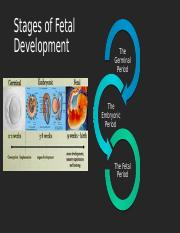 fetal development.pptx