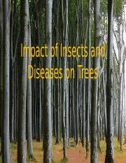 #3744795 disease and insects and the impacts they have on trees (1).pptx