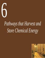 Ch06 Lecture-Pathways that Harvest and Store Chemical Energy