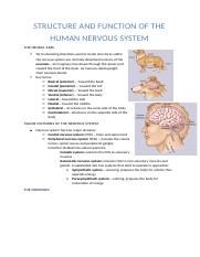 L4&5 structure of the human nervous system.docx