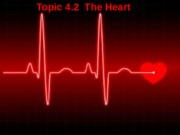 ANP1105 Topic 4.2 The Heart 2015