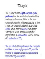 Lecture 12 - TCA cycle.pptx