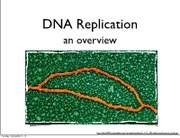 Lecture 3 DNA Rep Pt 2 slides 2013