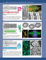 Cytoskeleton_handout_1-printed