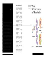 protein modeling.docx