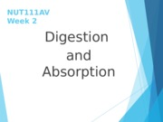 Digestion+and+Absorption+Slides