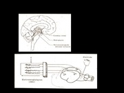 06  NEURO EXAM II upload