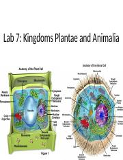 Lab 7 Kingdom Plantae & Animalia-b.pptx