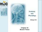 Chapter_10_Muscle_Tissue