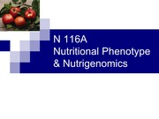 A_14+Phenotype_Nutrigenomics