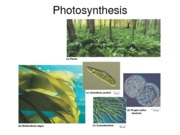 Biology, Photosynthesis Notes