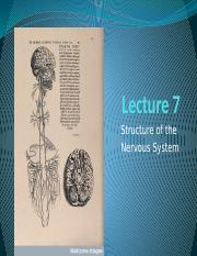 Lecture 7 Structure of CNS shorter