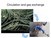 10-Circulation and Gas Exchange