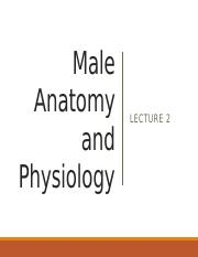 Lecture 2  Male Anatomy and Physiology.pptx