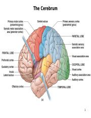 5 Functions of the brain_S16