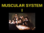 ANP 300 - Lecture 8 - Muscular System I
