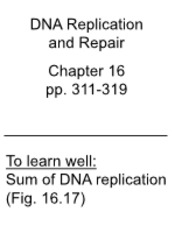 Lecture 30 2012 DNA Replic No telomerase Repair at end TO POST_slides