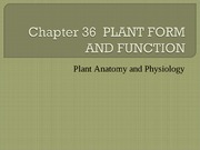 Chapter 36 PLANT FORM AND FUNCTION