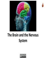 PDF The Brain and Nervous System SV.pdf