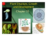 Ch 35 - Plant Structure Growth and Development (1 slide per page)