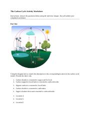 Carbon worksheet on cycle the Carbon And