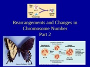 Lecture 16 Rearrangements and Changes in Chromosome Number2