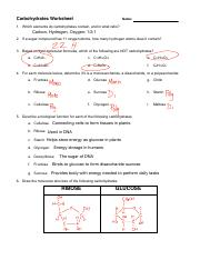 Carbohydrates Worksheet.pdf - Name Period Carbohydrates 1 ...