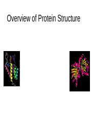 1. Overview of Protein Structure.ppt