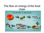The flow on energy of the food chain