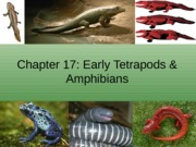 Chapter 17 Tetrapods and amphibians