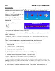 Fajarv: Protein Synthesis Race Worksheet Answer Key