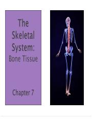 Chapter 7 Bone Tissue (Fall 2016).pdf