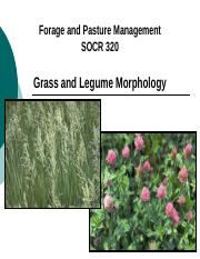 Grass and Legume Morphology (1).pptx