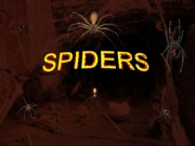 Y39-Spiders-6