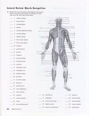 Muscle Diagram Packet