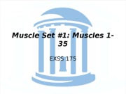 Muscles 1-35-1
