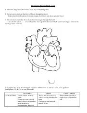 A&P - Circulatory Review Guide