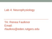 Lab+4_Neurophysiology+TA+Presentation