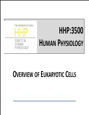 13_Overview of Eukaryotic Cells